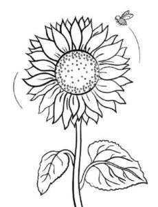 Gambar Mewarnai Bunga Matahari Depan