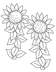 Gambar Mewarnai Bunga Matahari Dua Tangkai