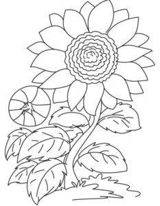 Gambar Mewarnai Bunga Matahari Kedua