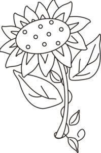 Gambar Mewarnai Bunga Matahari Lima