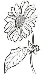Gambar Mewarnai Bunga Matahari Satu Tangkai