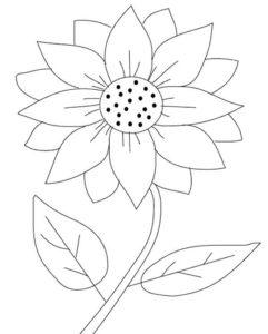 Sketsa Gambar Mewarnai Bunga Matahari