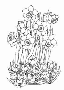 10. Gambar Mewarnai Bunga