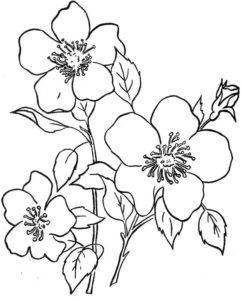 2. Gambar Mewarnai Bunga