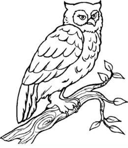 3.Gambar Mewarnai Burung