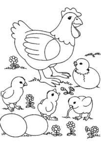 4.Gambar Mewarnai Ayam