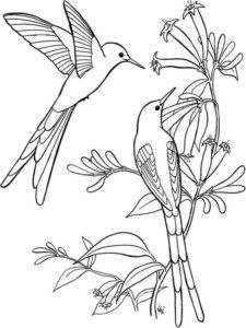 4.Gambar Mewarnai Burung