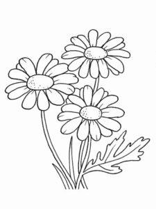 5. Gambar Mewarnai Bunga