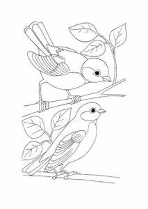 5.Gambar Mewarnai Burung