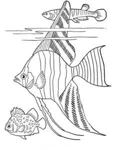 5.Gambar Mewarnai Ikan