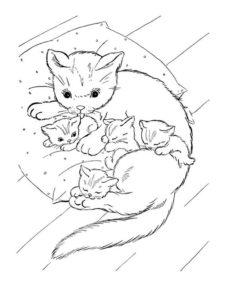 6.Gambar Mewarnai Kucing