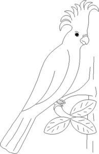 8.Gambar Mewarnai Burung