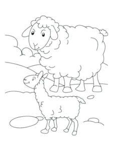 Gambar Mewarnai Domba 4