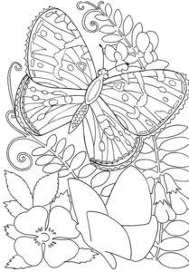 Gambar mewarnai kupu kupu 1