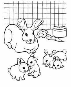 3.Gambar Mewarnai Kelinci