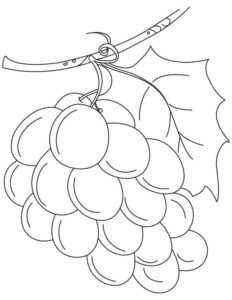 5.Gambar Mewarnai Buah Anggur