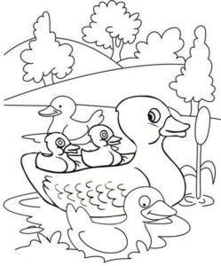 6.Gambar Mewarnai Bebek