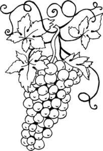7.Gambar Mewarnai Buah Anggur