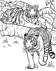 7.Gambar Mewarnai Harimau