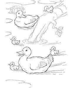 9.Gambar Mewarnai Bebek