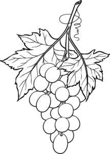 9.Gambar Mewarnai Buah Anggur