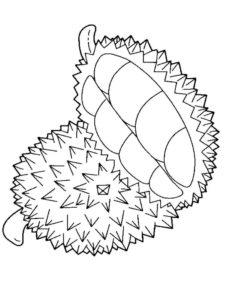 1.Gambar Mewarnai Buah Durian