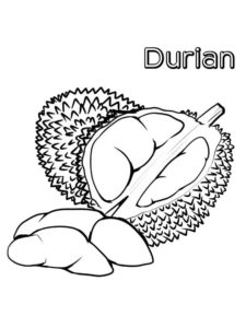 2.Gambar Mewarnai Buah Durian
