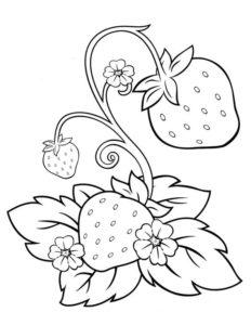 2.Gambar Mewarnai Buah Strawberry