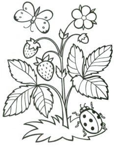 4.Gambar Mewarnai Buah Strawberry