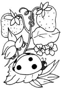 8.Gambar Mewarnai Buah Strawberry