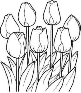 2.Gambar Mewarnai Bunga Tulip