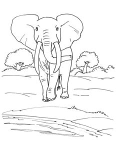3.Gambar Mewarnai Gajah