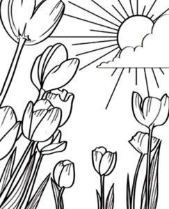 4.Gambar Mewarnai Bunga Tulip