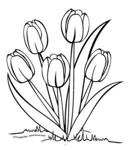 7.Gambar Mewarnai Bunga Tulip