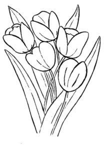 8.Gambar Mewarnai Bunga Tulip
