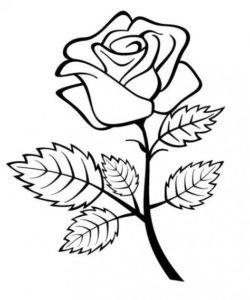 2.Gambar Mewarnai Bunga Mawar