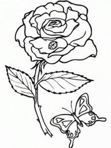 4.Gambar Mewarnai Bunga Mawar