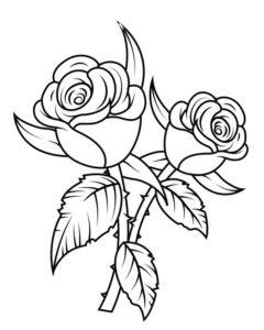 5.Gambar Mewarnai Bunga Mawar