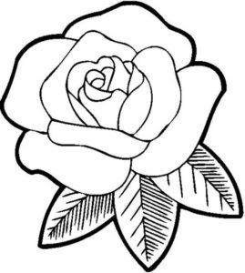 6.Gambar Mewarnai Bunga Mawar