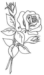 8.Gambar Mewarnai Bunga Mawar