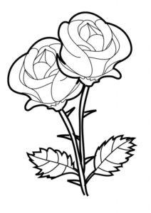 9.Gambar Mewarnai Bunga Mawar