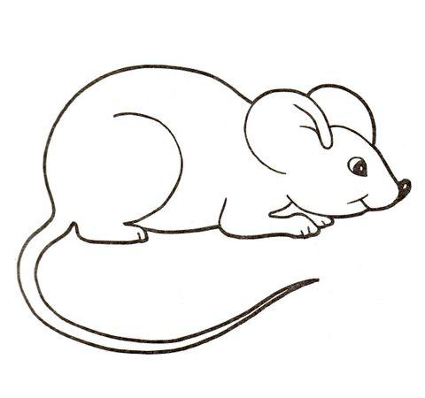 2.Gambar Mewarnai Tikus