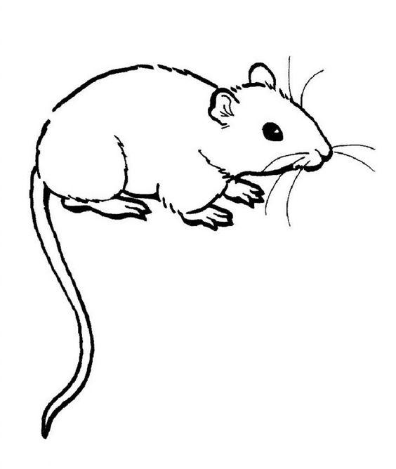 6.Gambar Mewarnai Tikus