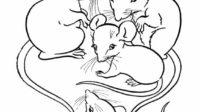 7.Gambar Mewarnai Tikus