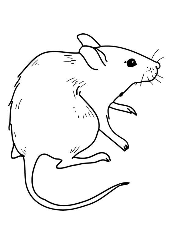 8.Gambar Mewarnai Tikus